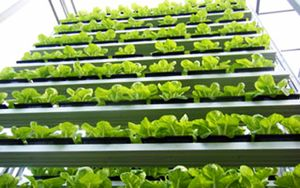 Sky-greens-singapore-worlds-first-vertical-farm-2